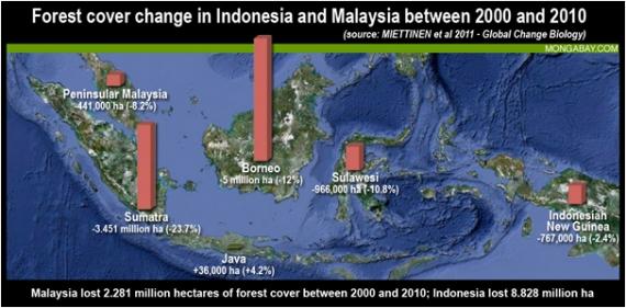 Wylesianie w Malezji i Indonezji