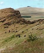 Wyspa Wielkanocna - lasy