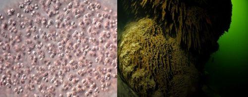Bakterie siarkowe i morze bałtyckie pozbawione życia pod koniec xxii
