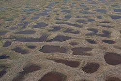 Jeziorka powstałe w wyniku rozmarzania zmarzliny